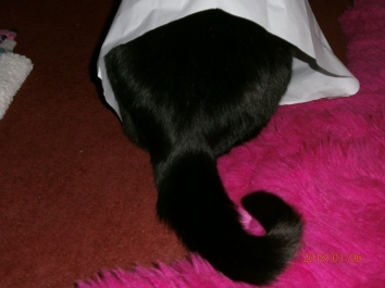 me-ow i can hide in here.