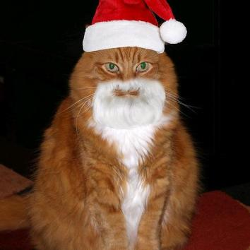 Cat-in-Santa-hat