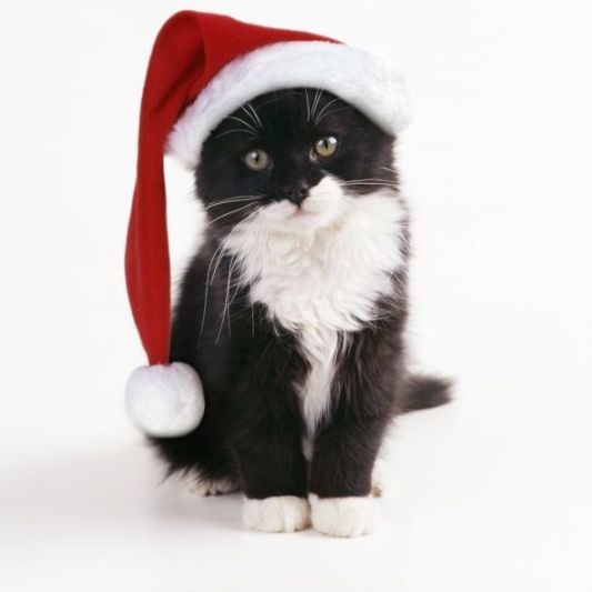 JD-11726-m Black & White Cat wearing Christmas hat John Daniels