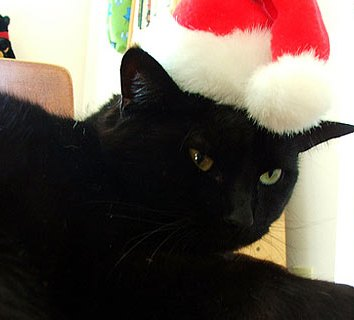 cat-christmas-advent-picture_17